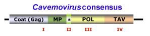 Cavemovirus.png