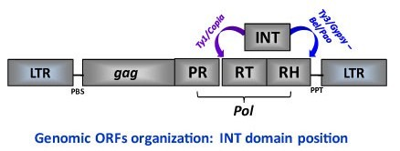 File:INT domain.jpg