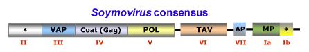 Soymovirus.png